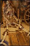 photo Squelette